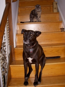 Jingle & Shelby on the stairs